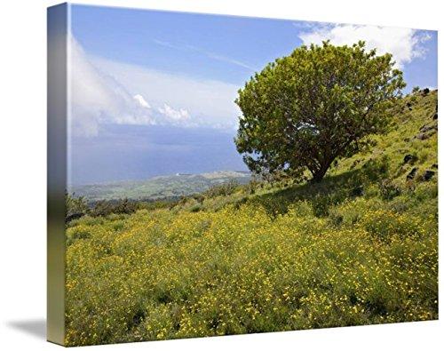 Wall Art Print entitled Hawaii, Maui, Lush Foliage And Tree In Kaupo Gap by Design Pics | 48 x - Gap Kaupo