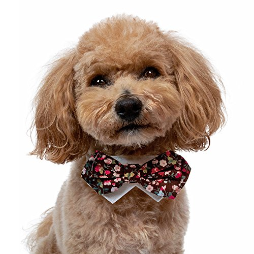 Tail Trends Dog Floral Bow Tie Collar Slider for Teacup to Medium and Large Breeds (S)
