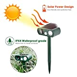 Yunt Ultrasonic Animal Pest Repeller Outdoor Waterproof Solar Powered Animal Repeller with Lights Electronic Animal Scarer No Hurt to Pets Dogs Cats