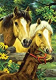Toland Home Garden Horse Family 28 x 40 Inch Decorative Cute Spring Summer Farm Pony Colt House Flag