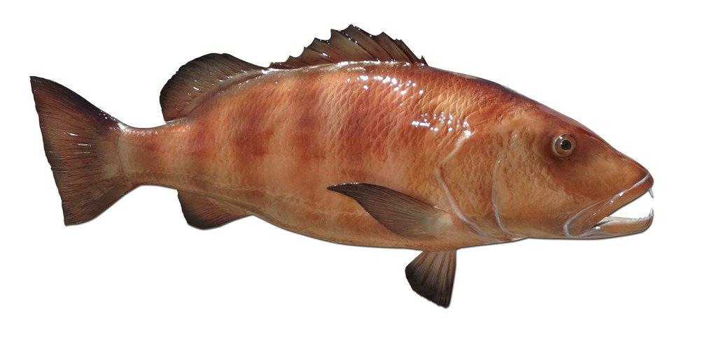 42'' Cubera Snapper Half Mount Fish Replica ,Fishing Wall & Coastal Decor