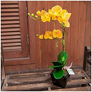 Binfen Artificial Silk Phalaenopsis Flower with Decorative Ceramic Square Vase Vivid Potted Orchid Plant Indoor or Outdoor Wedding Party Home Centerpiece Décor, Yellow