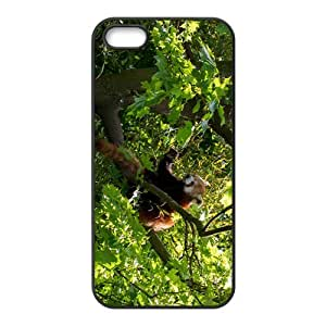 Lovely Raccoon Hight Quality Plastic Case for Iphone 5s
