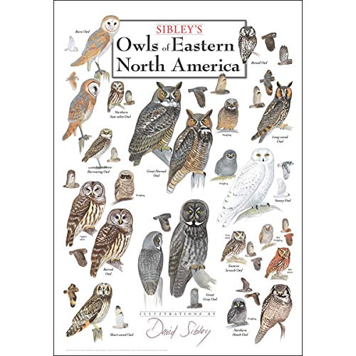 Earth Sky & Water Poster - Sibleys Owls of Eastern North America