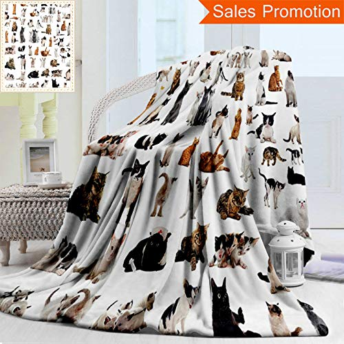 Unique Custom Warm 3D Print Flannel Blanket Cat Lover Decor Collection Group of Cats and Kitten Lying Down Purebred Norwegian Siamese Cozy Plush Supersoft Blankets for Couch Bed, Twin Size 60