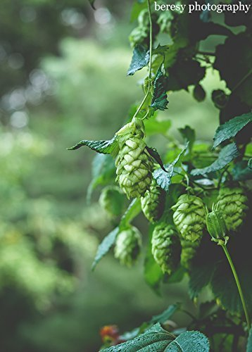 whats-hoppinin-rustic-wall-art-green-art-nature-photography-rustic-home-decor-beer-art