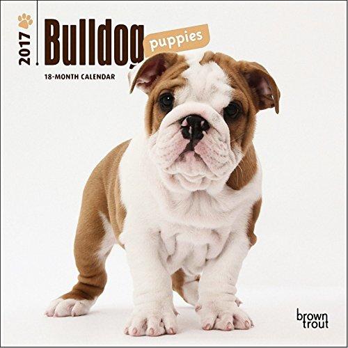 Bulldog Puppies Mini Calendar 2017 - Deluxe Small Wall Calendar (7x7)