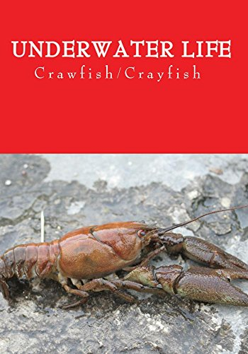 Underwater Life (Crawfish)