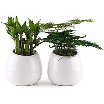 """T4U 3.9"""" Wall Mounted Succulent Hanging Planter Ceramic Flower Plant Pot Pack of 2 - Small White, Home and Office Desktop Decoration Ideal Gift for Wedding, Birthday, Party, Christmas"""