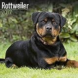 Rottweiler Calendar 2017 - Dog Breed Calendars - 2016 - 2017 wall calendars - 16 Month by Avonside