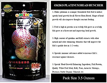 OKIKO PLATINUM HEAD HUNCHER COLOR FASTER Flowerhorn Fish