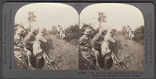 WWI stereoview Dog brings wounded man's helmet to First for sale  Delivered anywhere in USA