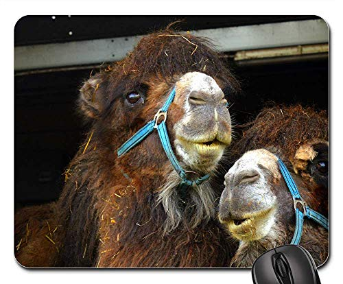 Mouse Pads - Camel Desert Ship Animal Mammal Dromedary ()