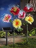 Solar Daisy Garden Stake Lights - Set Of 2