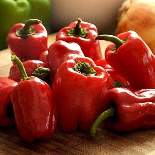 15 seed of Bell pepper CAJUN BELLE