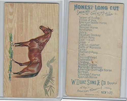 N101 Duke, Breeds of Horses, 1892, Dongola