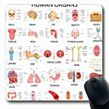 Ahawoso Mousepads for Computers Different Organ Complete Chart Human Anatomy Ear Eye Nose Thyroid Biology Design Heart Oblong Shape 7.9 x 9.5 Inches Non-Slip Oblong Gaming Mouse Pad
