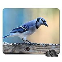 Beautiful Blue Jay Mouse Pad, Mousepad (Birds Mouse Pad)