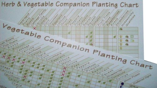 Companion Planting Chart (Planting Chart compare prices)