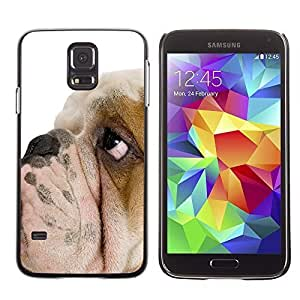 Hu Xiao GagaDesign Hard Skin case cover Pouch - English jw5ulEguWnd Bulldog British Breed Dog Puppy - Samsung Galaxy S5