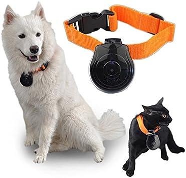 mofek cámara Cam Collar para perro Gatos Videocámara Grabadora ...