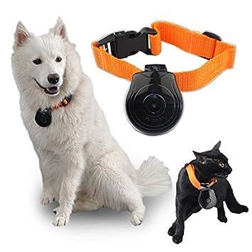mofek cámara Cam Collar para perro Gatos Videocámara Grabadora Video Pet Monitor - negro: Amazon.es: Productos para mascotas