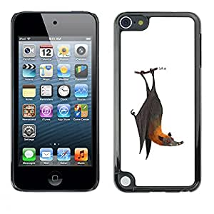 A-type Colorful Printed Hard Protective Back Case Cover Shell Skin for Apple iPod Touch 5 ( Bat Cute Cool White Grey Animal )