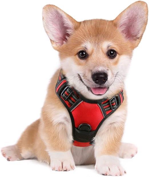 rabbitgoo Arnés Perro Pequeño Color Rojo Arnés Antitirones Perros Chaleco Cómodo Mascotas Líneas Reflectores Mejor Seguridad en Noche Tamaño S Pequeño: Amazon.es: Productos para mascotas