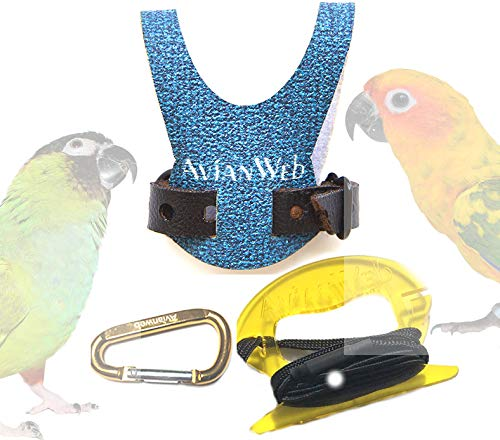 Avianweb EZ Conure Harness & 6 Foot Leash (Dazzling Blue, Personalized) by Avianweb