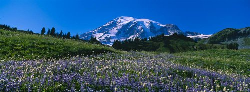 (Walls 360 Peel & Stick Wall Mural: Wildflowers Mt Rainier National Park)