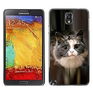 Stuss Case / Funda Carcasa protectora - Cute Cat Feline Pet Furry Grey Longhair - Samsung Note 3 N9000 N9002 N9005