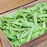 buy David's Garden Seeds Bean Bush Roma II E1306EQ (Green) 100 Heirloom Seeds now, new 2018-2017 bestseller, review and Photo, best price $8.49