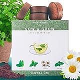 Grow 4 Herbal Tea Leaves from Seed - Indoor Herb Garden Growing Kit - Gardening Set for Beginners