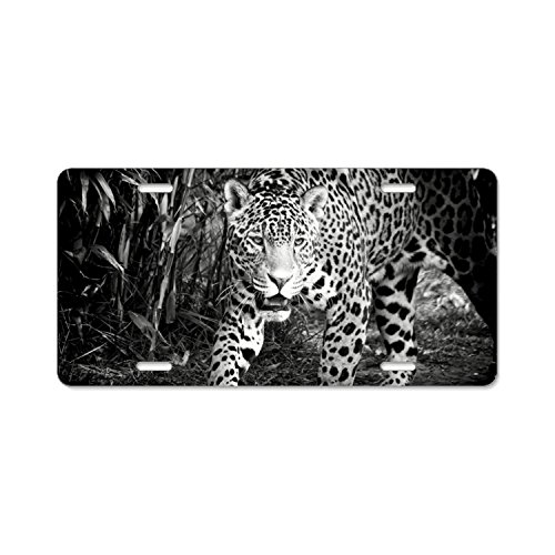 Elvira Jasper Fashion Design Cool Plate Tag Jaguar Car License Plate With 4 Holes - 12'''' X 6'''' by Elvira Jasper
