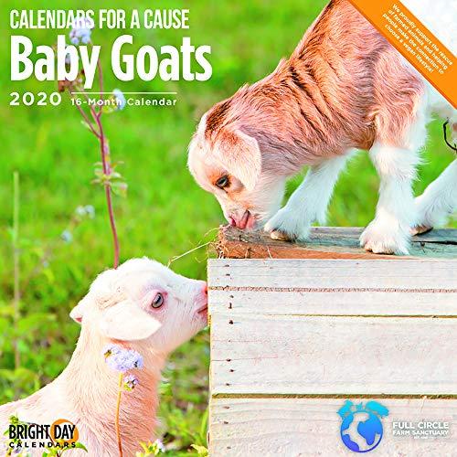 2020 Baby Goats Wall Calendar