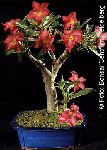 20Pcs Rare Succulent Mini Cactus Seeds Perennial Bonsai Plant Home FLTO