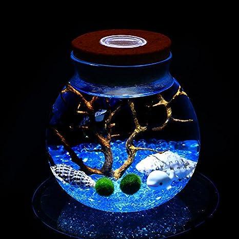 newdreamworld azul Marimo Acuario Kit con ORB jarra de cristal, bola de musgo, Azul