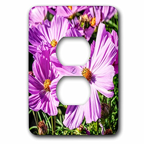 3dRose Alexis Photography - Flowers - Pink daisy flowers on a sunlit flowerbed. Summer joy - Light Switch Covers - 2 plug outlet cover ()