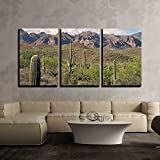 wall26 - 3 Piece Canvas Wall Art - Saguaros in Sonoran Desert. - Modern Home Decor Stretched and Framed Ready to Hang - 24''x36''x3 Panels
