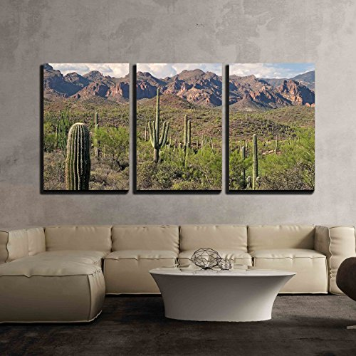 Saguaros in Sonoran Desert x3 Panels