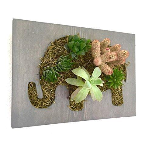 Elephant Succulent + Cacti Vertical Garden || Living Wall || Wall Planter ||