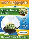 Golden Barrel Cactus Tiny Terrarium