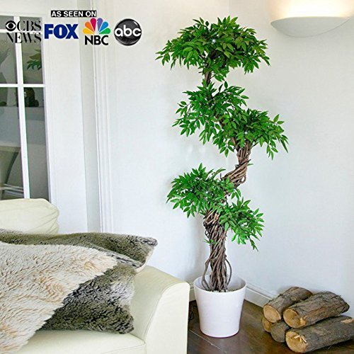 Artificial Plants And Trees Faux Japanese Fruticosa Tree Handmade Using Real Bark Synthetic Leaves Indoor Plant Approx 165cm Tall Amazon In Home Kitchen