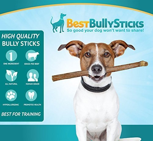 12 inch odor free bully sticks by best bully sticks 1 pound import it all. Black Bedroom Furniture Sets. Home Design Ideas