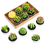 Swpeet 12Pcs Decorative Succulent Cactus Tealight Candles Kit, Cute Smokeless Succulent Plants Perfect for Candles Festival Wedding Props and House-Warming Party