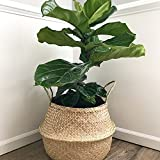 Natural Craft X-Large Seagrass Belly Basket for Storage, Laundry, Picnic and Woven Straw Beach Bag - Plant Pots Cover Indoor Decorative