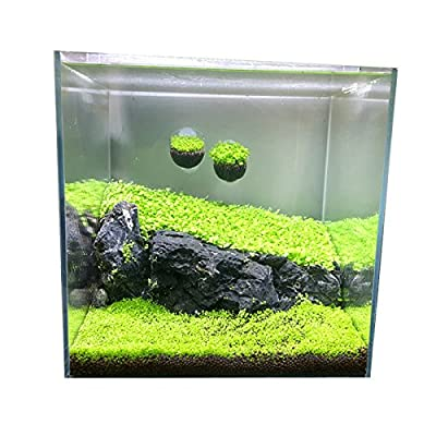 Aquarium Grass Plants Seeds Aquatic Double Leaf Carpet Water Grass for Landscape Fish Tank Rock Lawn Garden Decor: Garden & Outdoor