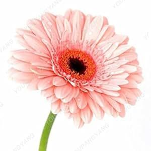 200 PC / bolso raras Semillas Bonsai hermosa del crisantemo Semillas Morifolium Muy fácil crecer la hierba de la planta de bricolaje jardinería Flor En Bonsai 7