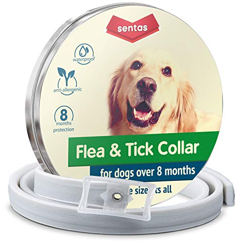 (Flеа collar | Flеа and tiсk prеvеntiоn for dogs | Flеа collar for dogs | Dog flеа and Tiсk Collar for Dogs | Dog Flеа Collars for Small Big Dogs)