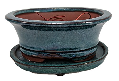 Pro Bonsai Pot/Saucer Pre-Wired - MossGreen/Oval- 6 3/8x4 3/4x2 5/8'' by Hirt's Gardens
